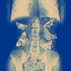butterflies-in-stomach-quotes-tumblr-211